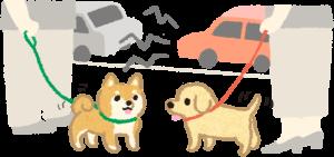狗狗適應社會
