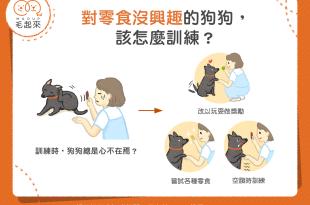 【汪喵訓練術】對零食沒興趣的狗狗,該怎麼訓練?