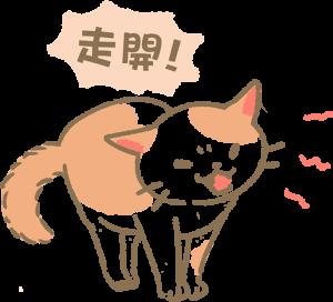 貓咪嘶嘶哈氣