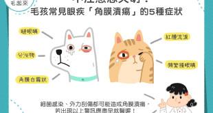 寵物角膜潰瘍的症狀