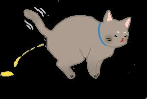 公猫结扎年纪