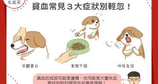 狗狗貧血3大症狀
