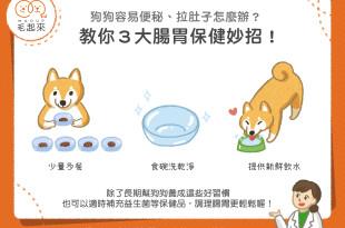 狗狗腸胃保健3大妙招
