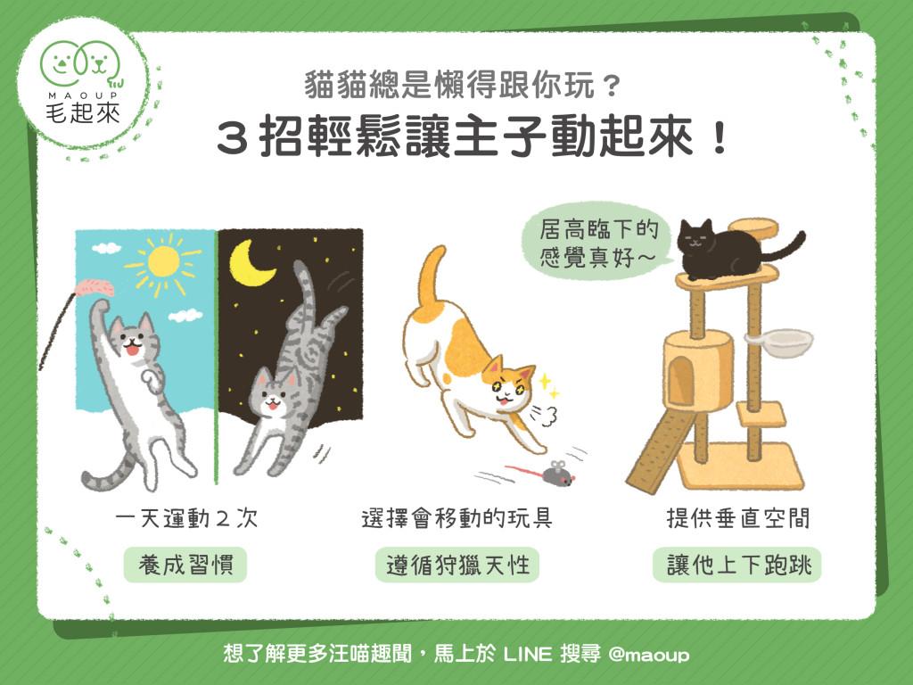 3招讓貓咪動起來