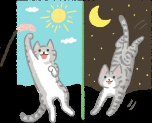 貓咪早晚運動