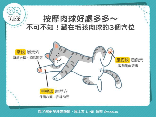 貓咪肉球按摩的3個穴位