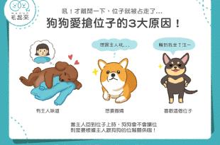 狗狗愛搶位子的3個原因