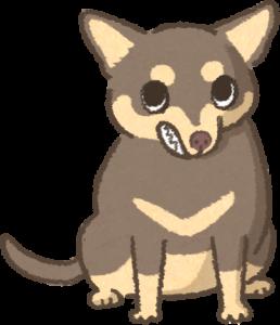 露齒低頭的狗狗