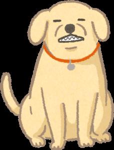 露齒瞇眼的狗狗