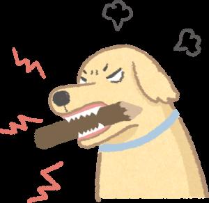 脾氣暴躁的狗狗