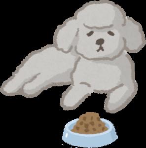 食慾不振的狗狗