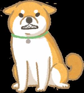 露齒耳朵往後貼的狗狗