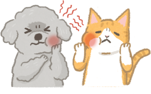 牙痛的貓狗