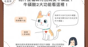 貓咪需要牛磺酸的2大原因