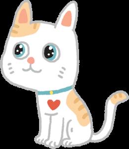 藍眼睛花貓