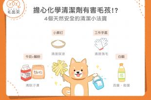 4個對寵物安全無害的居家清潔法寶
