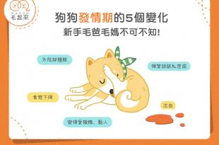 狗狗發情期的五個變化