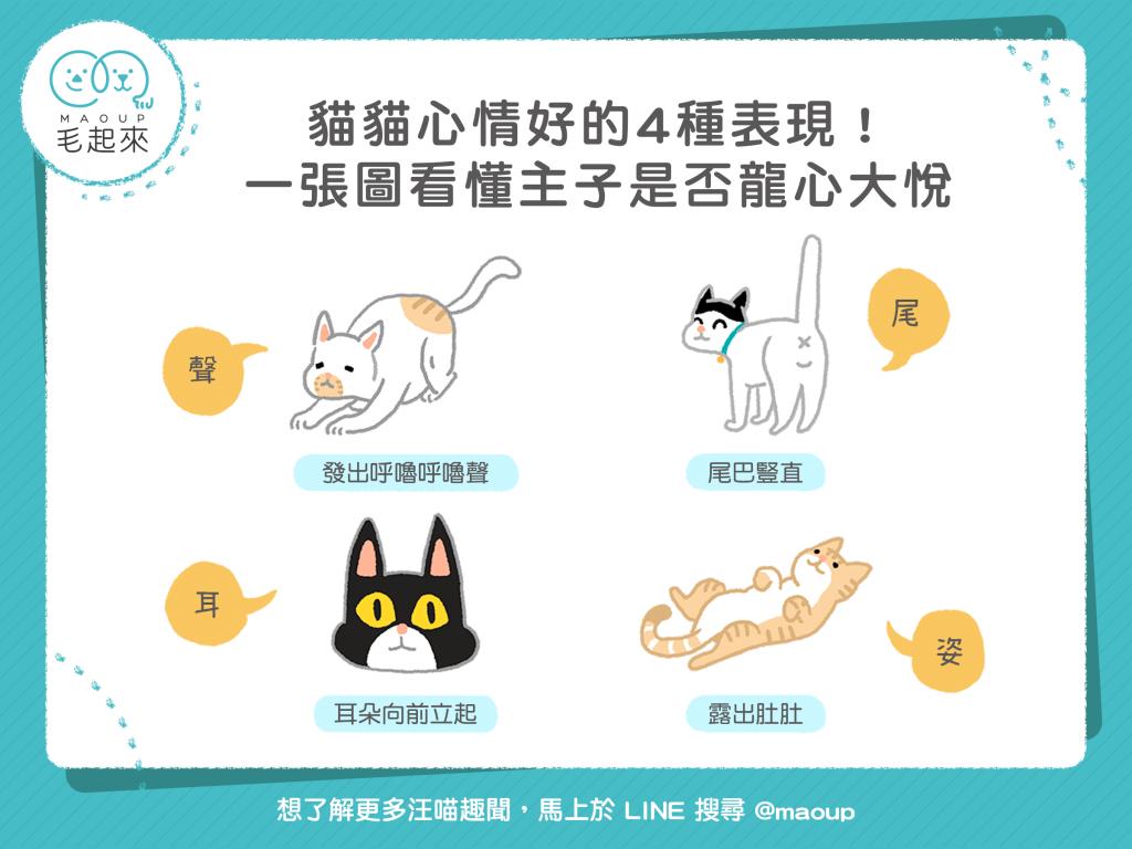 貓貓心情好的四種表現