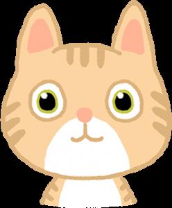 貓咪的臉龐