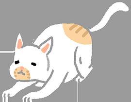貓咪心情好發出呼嚕聲
