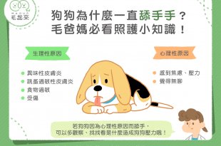 狗狗為什麼一直舔手