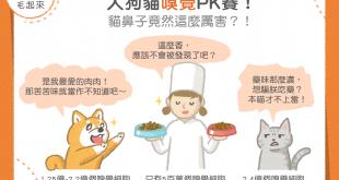 【毛孩知識王】人狗貓嗅覺PK賽!貓鼻子竟然這麼厲害?!