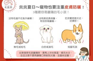 夏天貓狗要注意皮膚防曬