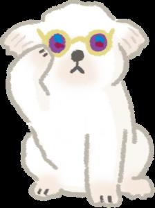 白毛或淺毛貓狗需注意防曬