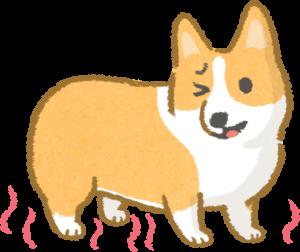 短腿貓狗需注意防曬