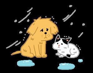 下雨天不要驅趕浪浪