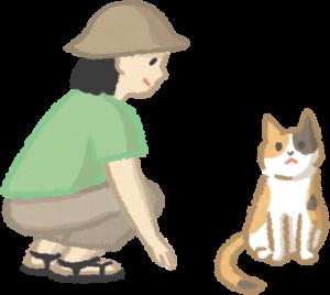 與貓接觸時要蹲低並慢慢靠近