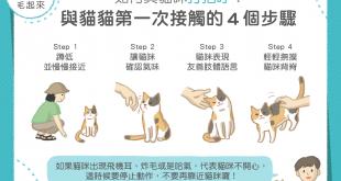 與貓咪接觸的4個步驟