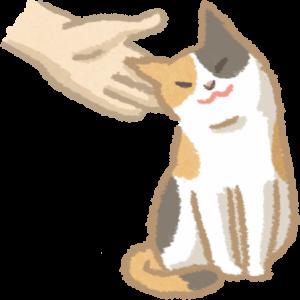 貓表現友善肢體動作
