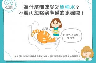 為什麼貓咪愛喝馬桶水?