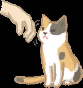 與貓接觸要讓貓聞氣味
