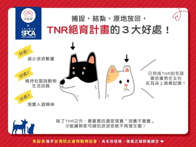 TNR絕育計畫的3個好處