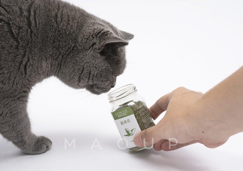 【貓咪旺農場】A級貓薄荷 以及貓