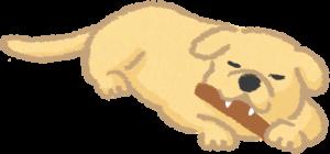 一隻吃潔牙棒的狗