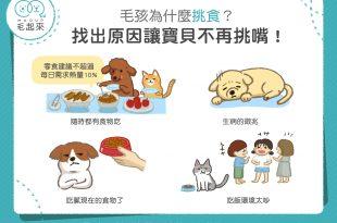 貓狗為什麼挑食?