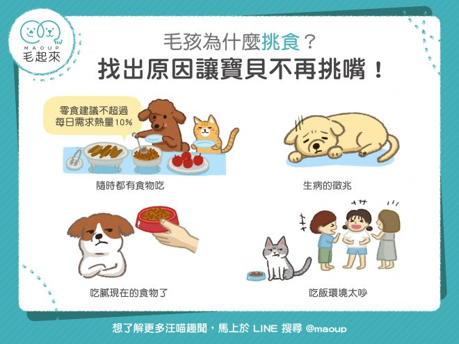 【貓狗健康】毛孩為什麼愛挑食?原來是這4個原因造成的!