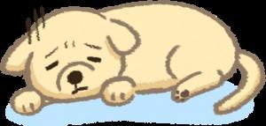 貓狗生病導致挑食
