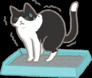 貓肛門腺發炎 便秘