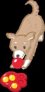 使用老犬益智玩具活動身體