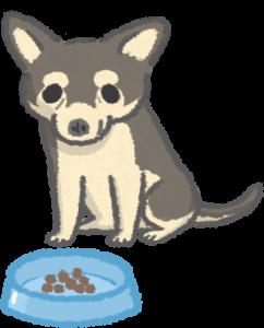 老犬適合少量多餐