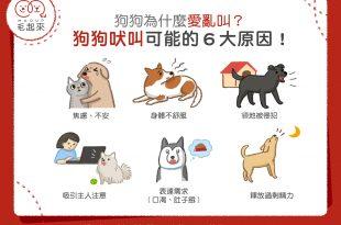 狗狗吠叫可能的6大原因