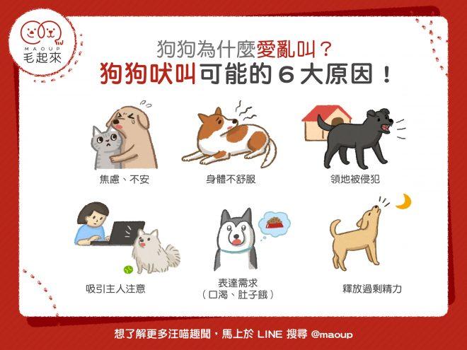 【毛孩行為】狗狗總愛亂叫?導致狗狗吠叫的6大原因!