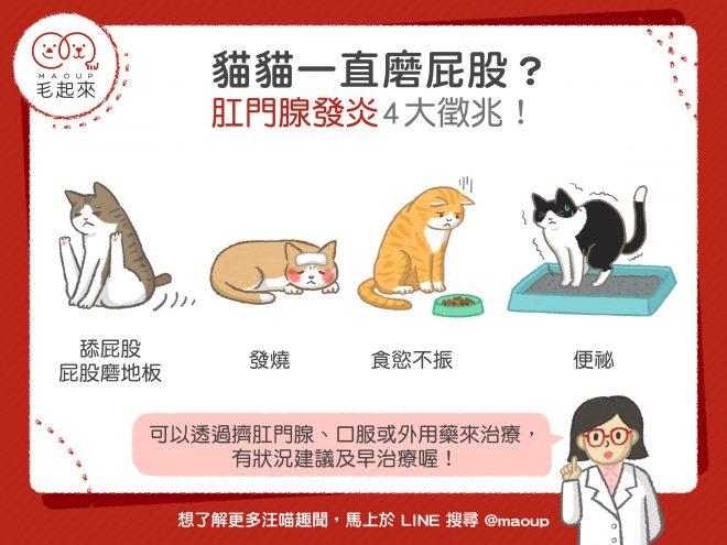 【貓貓疾病】貓貓一直磨屁股? 肛門腺發炎4大徵兆!