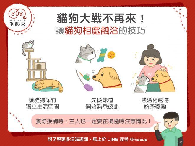 【狗貓家居】貓狗大戰不再來! 讓貓狗相處融洽的3個技巧