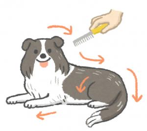 幫狗梳毛由前往後、由上至下