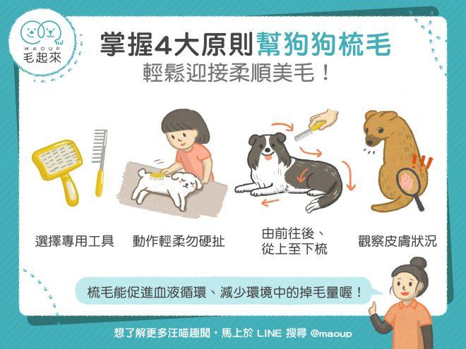 【毛孩保健術】狗狗梳毛4大原則!輕鬆迎接柔順美毛!